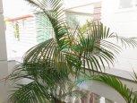 Căn hộ dịch vụ đường Phan Đình Phùng quận Phú Nhuận dạng 1 phòng ngủ ID 396 số 1
